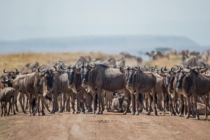 4 Nights / 5 Days The Serengeti…