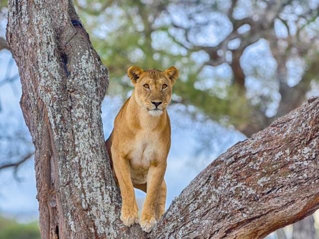 Safari 7 Days Tarangire National…