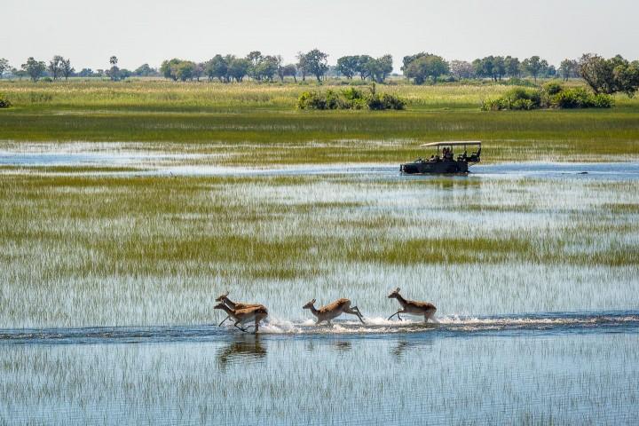 11 Day Best of Botswana Safari…