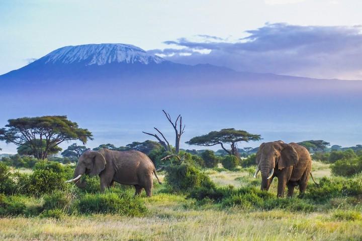 Africa Safari Selous 2 Days…