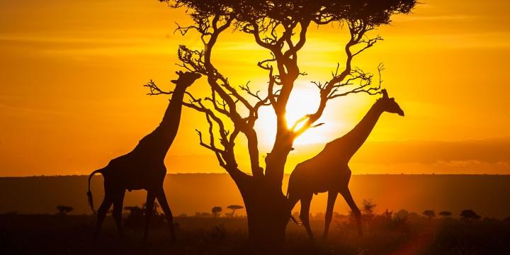 Kenya 8 / Days Nature tour…