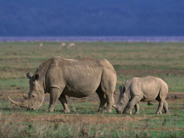 Safaris 6 Days Serengeti,…