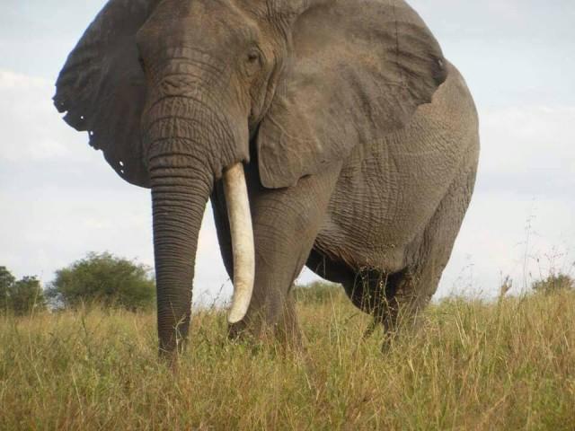 Safaris 2 Days Tarangire…