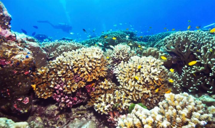 Scuba diving By HOE