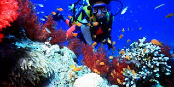 One day Snorkelling excursion…